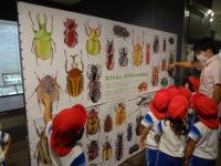 昆虫展🐞...